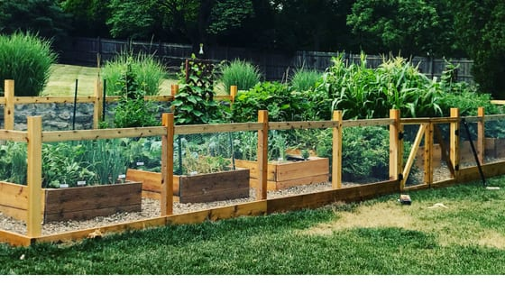 DIY Raised Garden Beds [Watchouts and Planning Tips] • Bee and Basil