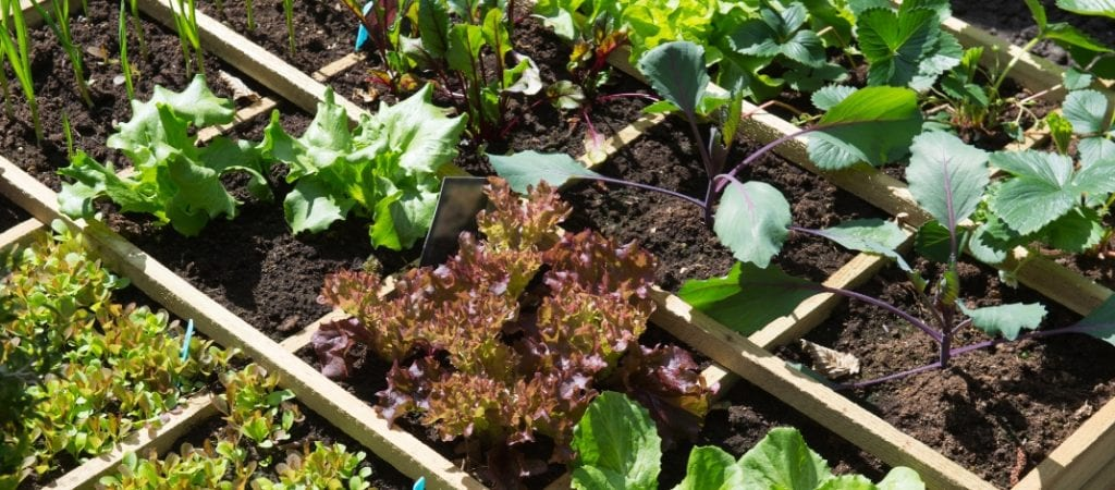Vegetable Garden Layout Ideas For Beginners Bee And Basil